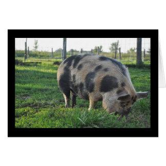 Cartes Tima le porc de KuneKune