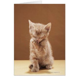 Cartes Toilettage de chaton
