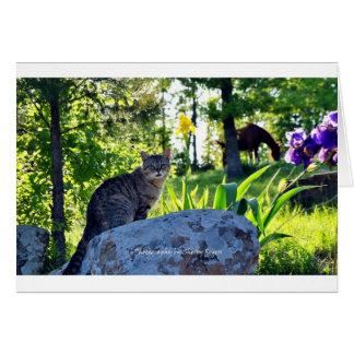Cartes ~ Top Cat sur Rock~