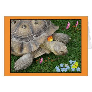 Cartes tortue et fleurs