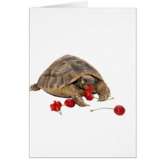 Cartes Tortue et fraises de Hermann