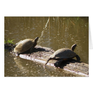 Cartes Tortues