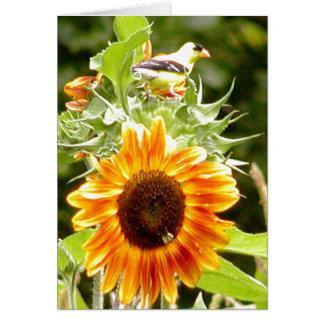 Cartes Tournesol et oiseau et abeille jaunes