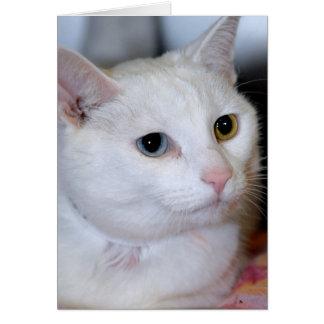 Cartes Tout-Blanches de salutation/note de chat de