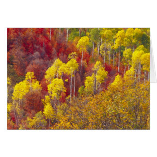 Cartes Trembles colorés en canyon Utah de Logan dans les