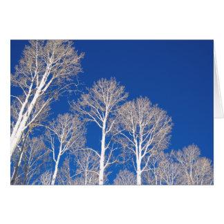 Cartes Trembles en hiver