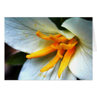 Cartes Trillium