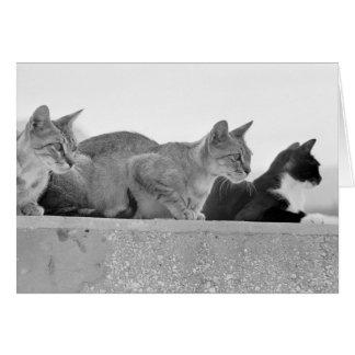 Cartes Trois chats