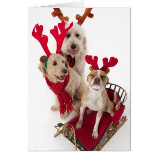 Cartes Trois chiots se reposant au temps de Noël