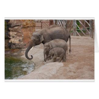 Cartes Trois éléphants