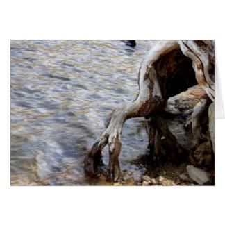 Cartes Tronçon d'arbre dans le lac, lacs gigantesques CA,