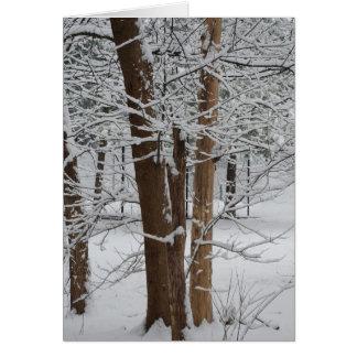 Cartes troncs neigeux