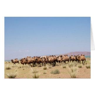 Cartes Troupeau de chameaux Bactrian