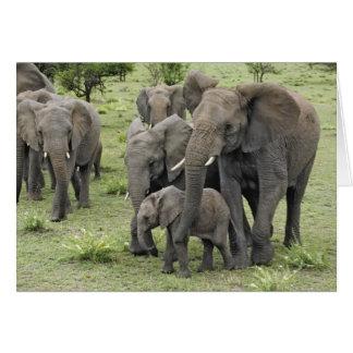Cartes Troupeau d'éléphant africain, africana de