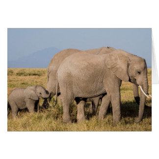 Cartes Troupeau d'éléphant avec des jeunes
