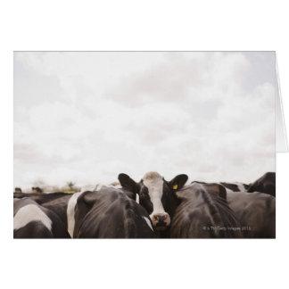 Cartes Troupeau des bétail et du ciel obscurci 2