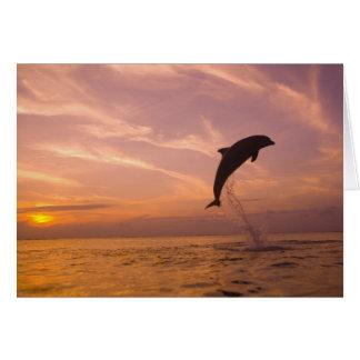 Cartes Truncatus de Tursiops de dauphins de Bottlenose)