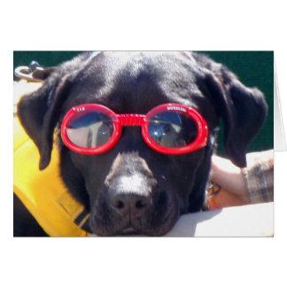 Cartes Tucker dans des canines Labrador de conservation