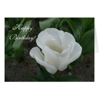 Cartes tulipe blanche