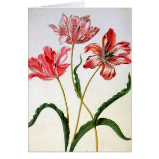 Cartes Tulipes