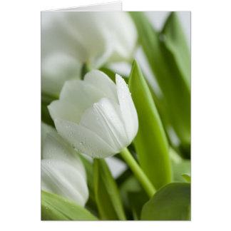Cartes Tulipes blanches