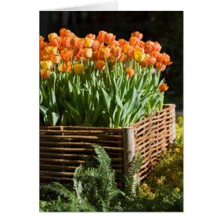 Cartes Tulipes de floraison vibrantes
