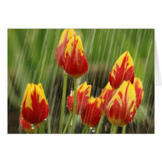 Cartes Tulipes de ressort