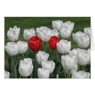 Cartes Tulipes de Valentine