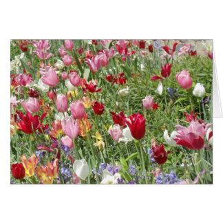 Cartes Tulipes, jardin national de cathédrale