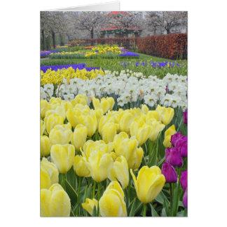 Cartes Tulipes, jonquilles, et fleurs de jacinthe de