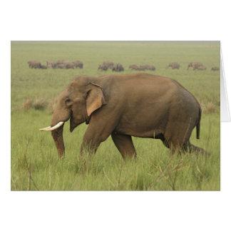 Cartes Tusker et son troupeau, parc national de Corbett,
