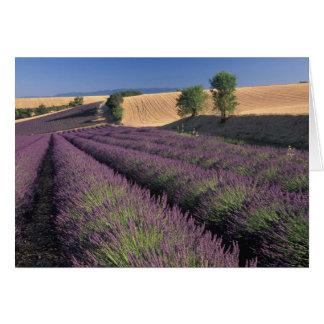 Cartes UE, France, Provence, gisements 3 de lavande