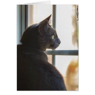 Cartes Un chat offre bonjour ou la sympathie