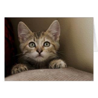Cartes Un chaton tigré très doux