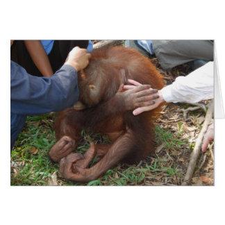Cartes Un coup de main pour des orangs-outans