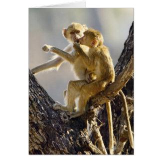 Cartes Un jeune babouin jaune (cynocephalus de Papio)