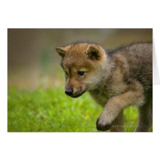 Cartes Un loup de bébé