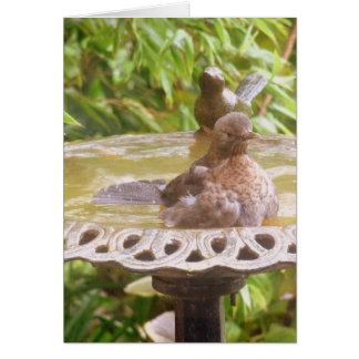 Cartes Un oiseau à Bath