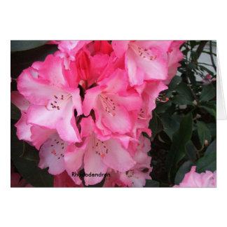 Cartes Une explosion de rhododendron de gala