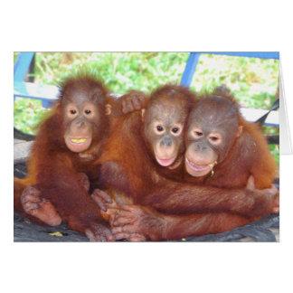 Cartes une foule de 3 pas - bébés d'orang-outan