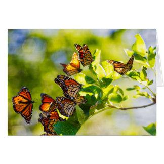 Cartes Une réunion des papillons de monarque