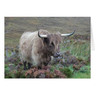 Cartes Vache des montagnes