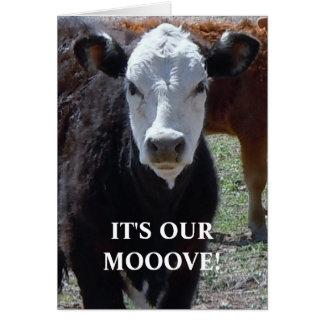Cartes Vache noire et blanche - changement d'adresse