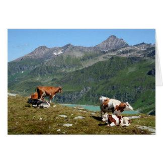 Cartes Vaches dans les montagnes