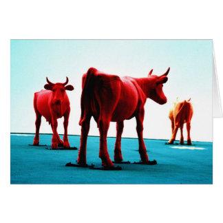 Cartes Vaches rouges