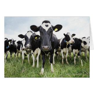 Cartes Vaches se tenant dans une rangée regardant