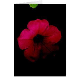 Cartes Vide-Noir et rose