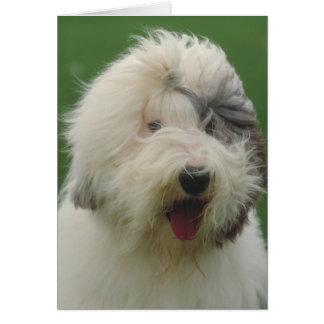 Cartes Vieux chien de berger anglais