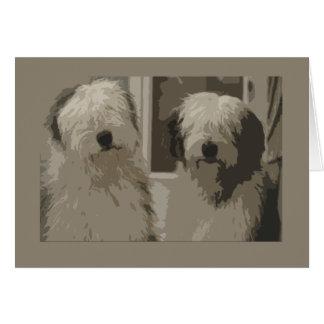 Cartes Vieux chiens de berger anglais