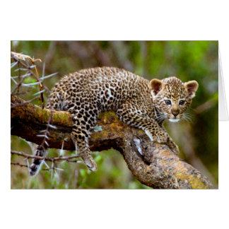 Cartes Vieux léopard de trois mois (Panthera Pardus) CUB
